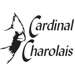 HPCS PREFERRED SEEDSTOCK PARTNER CARDINAL CHAROLAIS