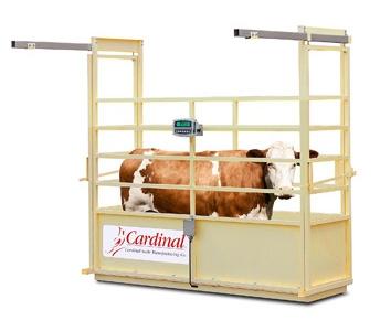 Cardinal Scale MFG Single Animal Livestock Scale