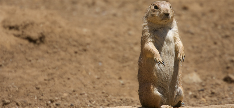 Take Aim, Responsibly. Get Rid of Prairie Dogs on Your Land.