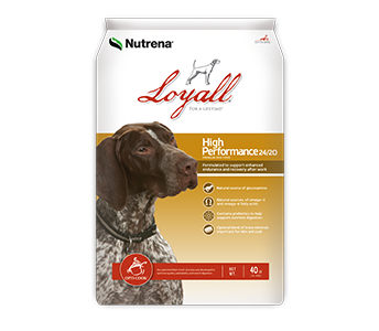 Loyall High Performance