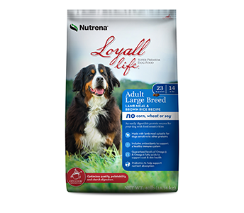 Loyall Adult Large Breed Lamb & Rice