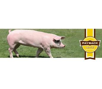 PayBack Swine Feeds