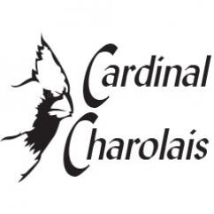 HPCS PREFERRED SEEDSTOCK PARTNER CARDINAL CHAROLAIS