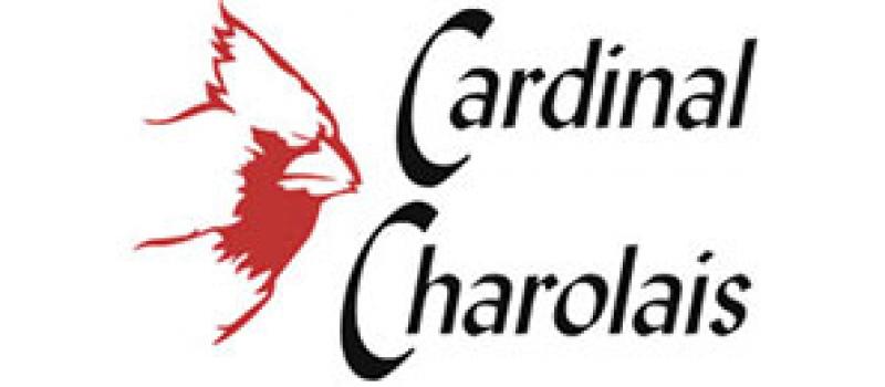 cardinal-charolais